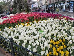 lalele istanbul